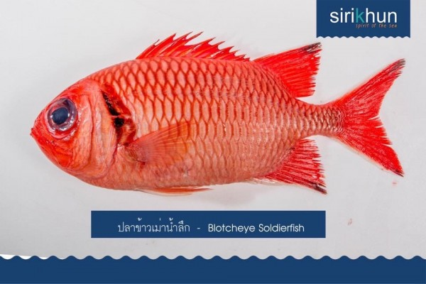 ปลาข้าวเม่าน้ำลึก|IMG_1224.JPG