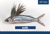 ปลาบิน