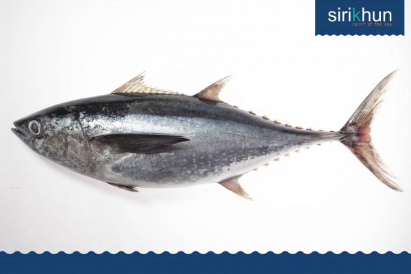 ปลาโอดำ|IMG_1374.JPG
