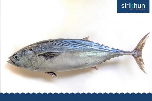 ปลาโอลาย|IMG_1372.JPG
