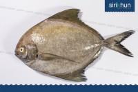 ปลาจาระเม็ดดำ โอเชีย