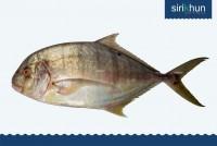 ปลาตะคอง