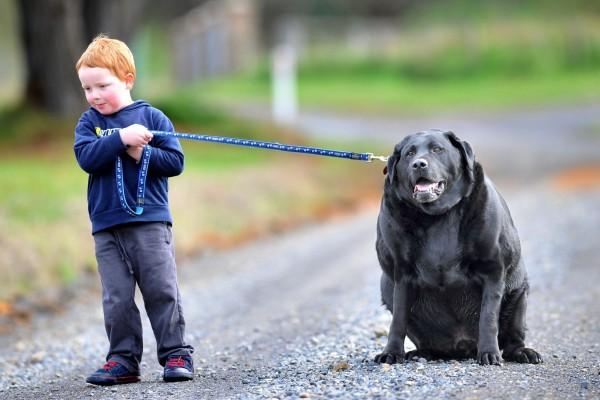 บัญญัติ 10 ประการ น้องหมา ห่างไกลความอ้วน อย่าตามใจปากสุนัข|GettyImages-117095407.0.jpg