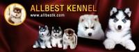 ทำไมไซบีเรียน ALLBEST KENNEL ถึงเป็นที่หนึ่ง และเป็นเจ้าแรกที่มีระบบการจัดการที่ดีที่สุด