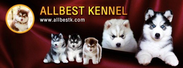ทำไมไซบีเรียน ALLBEST KENNEL ถึงเป็นที่หนึ่ง และเป็นเจ้าแรกที่มีระบบการจัดการที่ดีที่สุด|FB-Cover(1).jpg