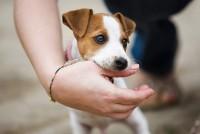 ลูกสุนัขชอบกัดมือกัดเท้าตลอด แก้พฤติกรรมนี้อย่างไร