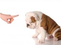 ตักเตือนสุนัขเมื่อทำผิด ให้ได้ผล ต้องทำอย่างไร