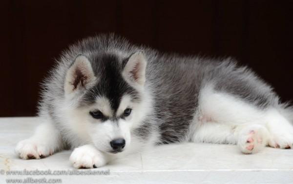 สุนัขท้องเสียควรทำอย่างไร...|19620180_1575234952511393_8974771005737648421_o.jpg