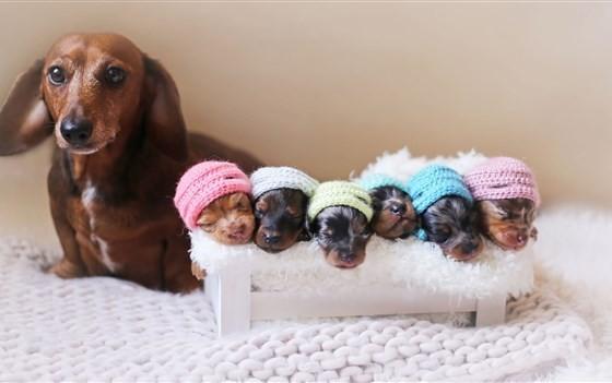 การให้อาหารสุนัขตั้งท้อง|puppies-in-hats-today-160616-tease-03_2ce3f4a46c221b658efbc8c25398fc85.focal-560x351.jpg