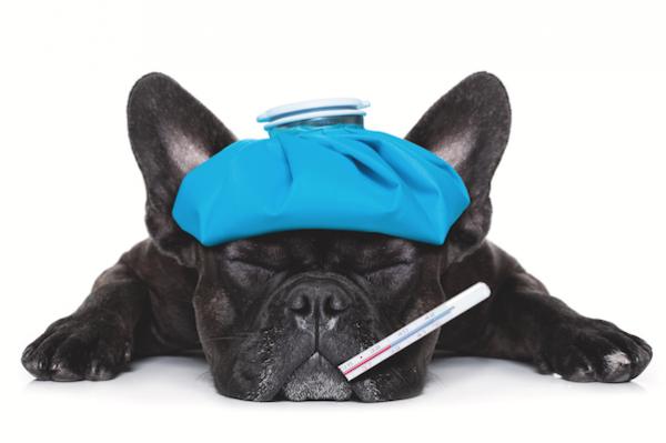 โรคไข้หัดกับปอดบวม อาการจะคล้ายๆกันจนทำให้หลายท่านจิตตก|flu-thumb.png