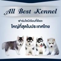 คนรักสุนัขไซบีเรียนฮัสกี้ ไม่มีใครไม่รู้จัก Allbest kennel