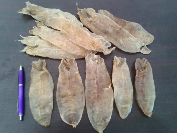 กระเพาะปลา คือถุงลมของปลา|26239363_941022426052453_6257805775435656490_n.jpg