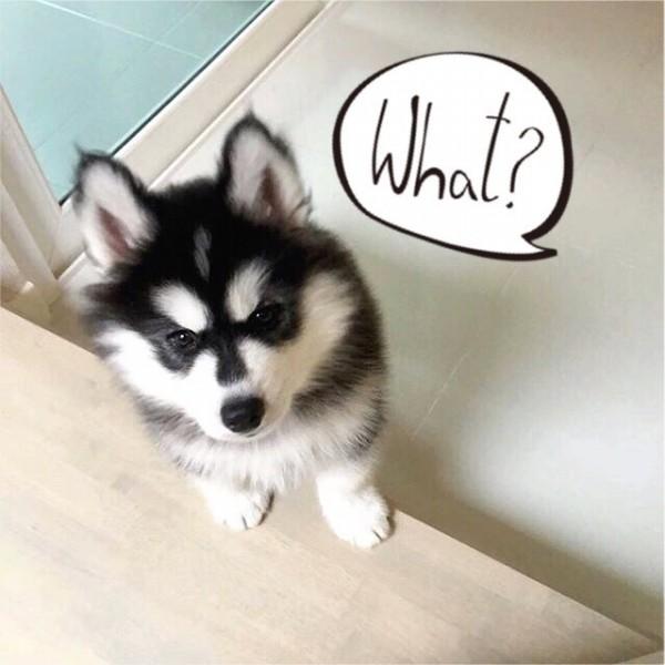 ท่านอนน้องหมา สำคัญไฉน|S__24215576.jpg