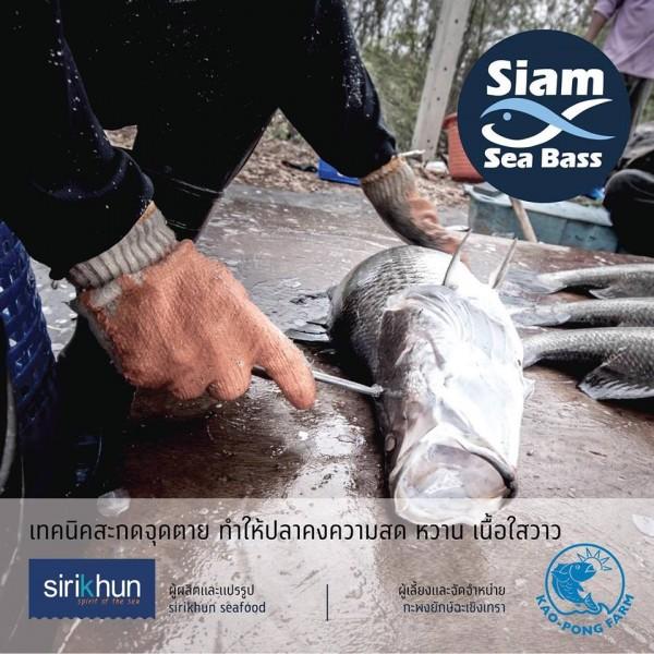 สะกดจุดปลา|32416413_1008608119293883_2587807251418841088_n.jpg