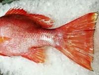 ไม่อร่อย หรือไม่รู้จักปลา