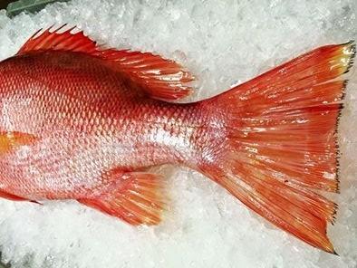 ไม่อร่อย หรือไม่รู้จักปลา 12190887_1486225978349278_1171175729555097373_n.jpg