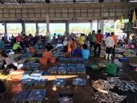 พาคนญี่ปุ่นดูตลาดปลาไทย