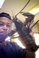 คะแนน lobster