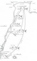 ปลาทู ตำนานสองเมือง