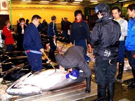 ในน้ำมีปลาในนามีข้าว|fishmarket3.jpg