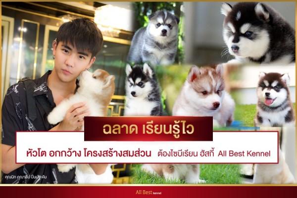 คนรักสุนัขไซบีเรียนฮัสกี้ ไม่มีใครไม่รู้จัก Allbest kennel|41.jpg