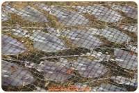 หมึกแห้งที่ปราณบุรี