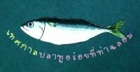 เทศกาลปลาทูสาว ขาวๆ อวบๆ ที่ ท่าฉลอม