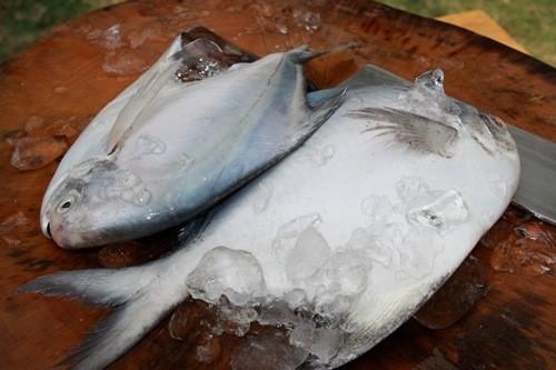 มากินปลาจาระเม็ดขาว จิ้มซีอิ้ว|101.JPG