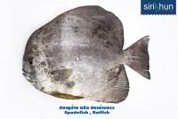 ปลาหูช้าง