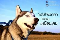 เศร้าใจ ทำไมสุนัขไม่ขี้เล่นเหมือนเคย?