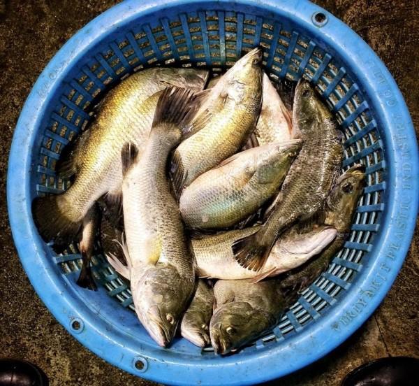 วางตะคัดดักปลา 10653479_1502157543422788_3517869691686086811_n.jpg