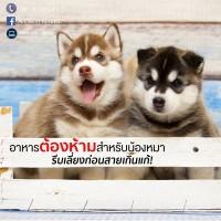 4 อาหารต้องห้าม สำหรับน้องหมา ‼️