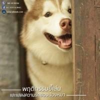 น้องหมามักแสดงพฤติกรรมออกถึงความมั่นใจ และอยากเล่นสนุกผ่านทางภาษากาย