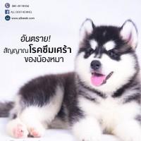 อันตราย!! สัญญาณโรคซึมเศร้าของสุนัข