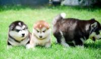 3 โรคที่ควรรู้เกี่ยวกับสุนัข