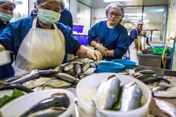 เยี่ยมชมการผลิตปลาทูนึ่ง sirikhun|ท๊อปดูโรงงาน_๑๘๐๘๓๐_0009.jpg