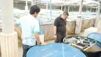 ดูงานระบบน้ำในการเพาะเลี้ยงสัตว์น้ำ