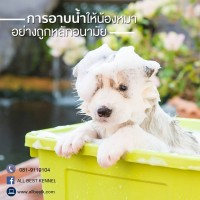 การอาบน้ำให้น้องหมาอย่างถูกหลักอนามัย